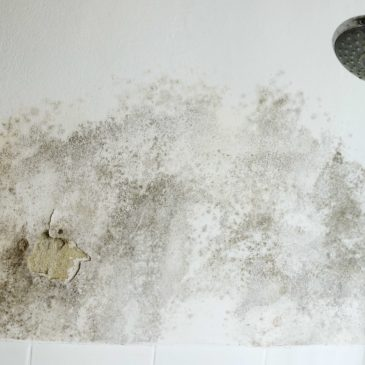 Tips to Prevent Bathroom Water Damage- Water Restoration Springfield MO